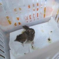 我が家に来た小鳥