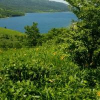 「夏になり なぜか会いたい 野反湖に」会いたい川柳