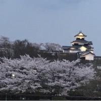 桜に感動&感謝です!