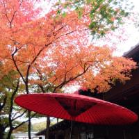 箱根の昼会食と紅葉散策