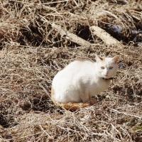 冬の野鳥⑮-羊山公園付近