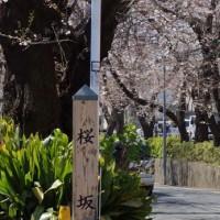 桜の名所巡り・・・・