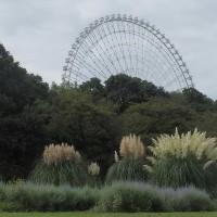 万博公園「夏の花八景」&「中秋の名月」