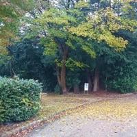 落ち葉のお散歩🎵