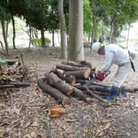 樹林地作業(1013)