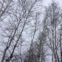 文句垂れのなんとか、雪が身にしみる