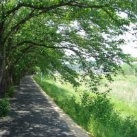 昨日の「ミー散歩」 新川堤防
