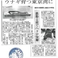 東京湾のウナギ復活を目指して