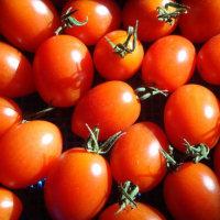アナカリス  パソコン  アイコトマト