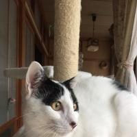 くーさん、窓の外を眺める