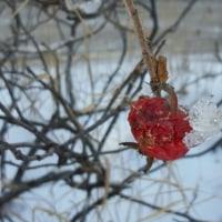 雪の中の赤色