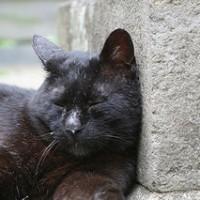 黒猫 写真5