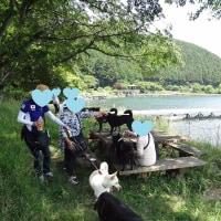田貫湖畔 一周ワン散歩
