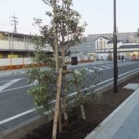 房総からの春便り 駅前の植栽工事