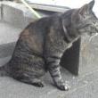 ★ 猫だもの・・・(=`ω´=) ฅ