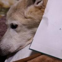 愛犬まるの今後の治療