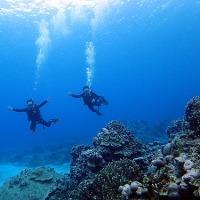 『サンゴ・ジューゴ』 中丸健太郎 (曇り)