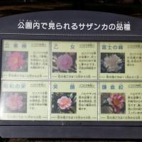 亀戸中央公園・晩秋の紅葉と山茶花(12月5日)