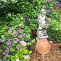 紫陽花と草花のアレンジメント♪