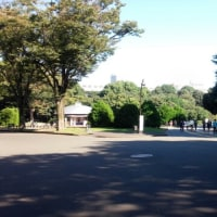 駒沢公園ペース走