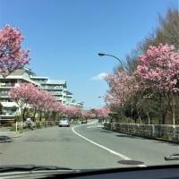桜と「ヘビーメロウ」