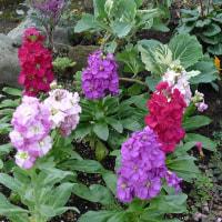 庭にミニ花壇づくり