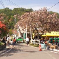 神津牧場  花まつり    5月22日 日曜日  快晴