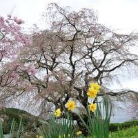 3.8億円が… 4月20日(木)晴れのち曇り