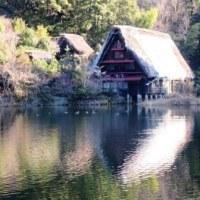 Gifu/ Matsuo Pond ( 松尾池)