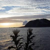 2016年小笠原村硫黄島慰霊墓参(364)小笠原丸で硫黄島を周回(75)献花のための菊と摺鉢山