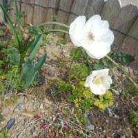 我が家の お花様達  632