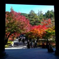 琵琶湖疎水から真如堂へ