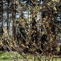 春の百合が原公園で