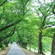 京都・蓮めぐり
