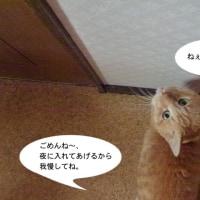 入れて〜!