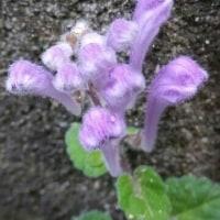まっ白い花