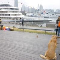 横浜花散歩