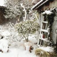 弥生の空に雪ぞ降りける