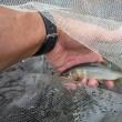 解禁後1週間で魚野川復活