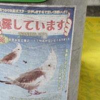 鳥の捜索張り紙
