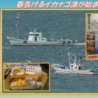 大阪湾の恵み 「春告げるイカナゴ漁が始まった」