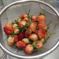 夏野菜の植え付け&初夏の味。(ソラマメ)