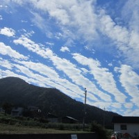 今日の空と田んぼ~~(^^)v