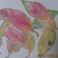 ベランダの落ち葉