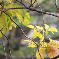 山岳点景:秋2016.10×黄紅葉