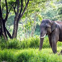 林の中の象のように