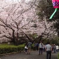 浜松城公園さくらまつり&第13回アース・エコ・フェア浜松城公園2017