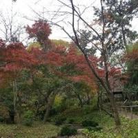 秋の三渓園