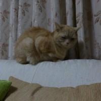 前編)ネコの日 =^_^=