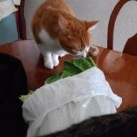 白菜も好き